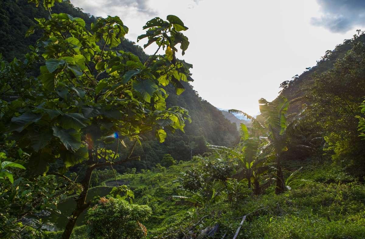 Der vermisste Mann wurde im Dschungel entdeckt. (Symbolbild) Foto: imago images/Cavan Images