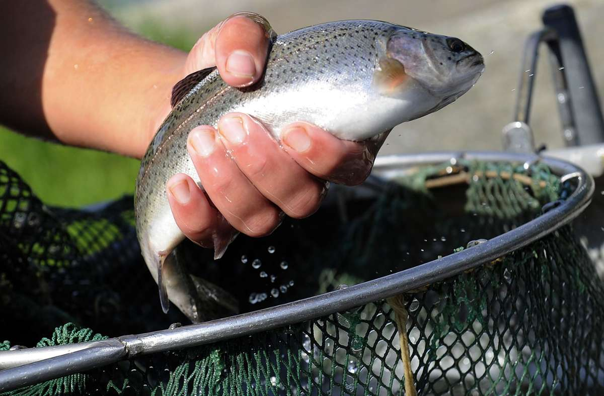 Unbekannte haben Fischteiche geplündert. (Symbolbild) Foto: /dpa