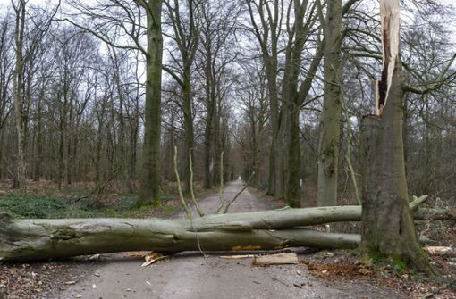 Warnung vor Waldspaziergängen im Kreis Esslingen