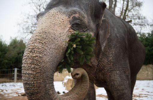 Leckere Speise für Elefanten und Affen
