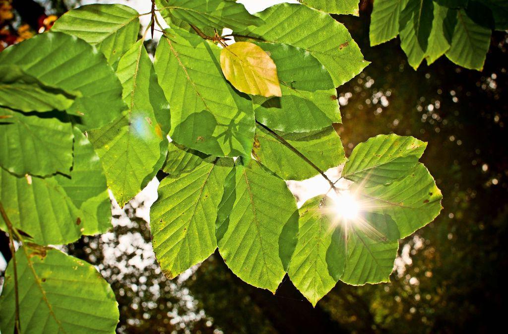 Wo Blätter sind, da ist auch Schatten. Foto: Lichtgut/Max Kovalenko