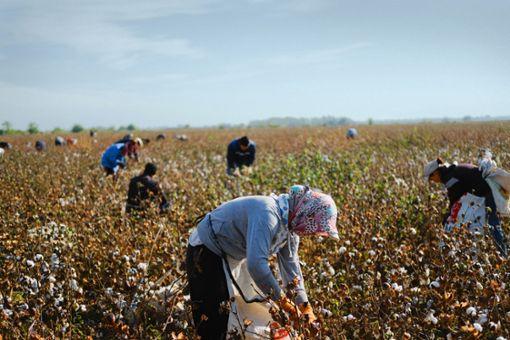 Das Land der  Baumwoll-Sklaven