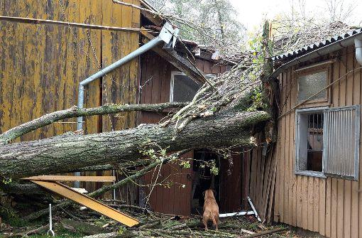 Baum kracht in Stuttgart-Möhringen auf Pferdestall