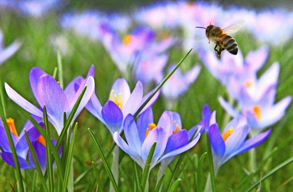 Das  Dietrich-Bonhoeffer-Gymnasium setzt auf Wissenschaft pur, während es das Immanuel-Kant-Gymnasium mit 100000 Bienen versucht. Foto: Michael Eick