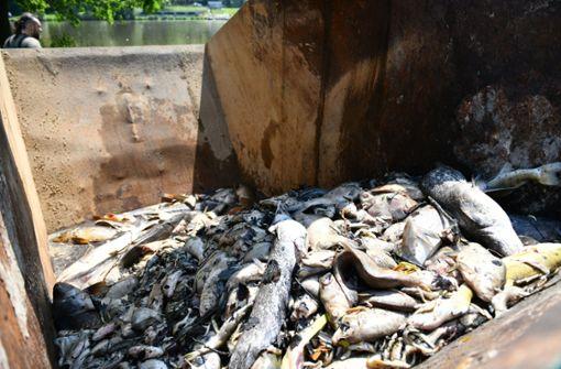Eine Tonne toter Fische aus dem Rhein geborgen