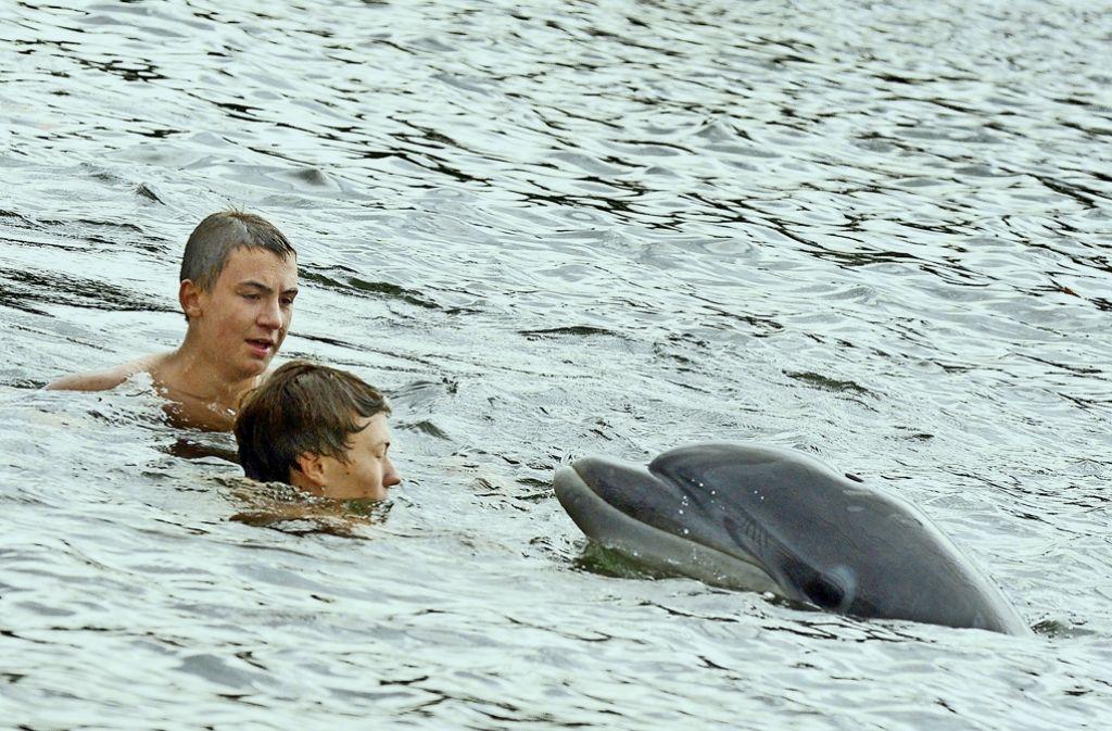 Zwei Schwimmer wagen sich ganz nahe an den Delfin, der sich derzeit in der Kieler Förde aufhält. Meeresbiologen und die Wasserschutzpolizei sehen das gar nicht gerne. Foto: dpa