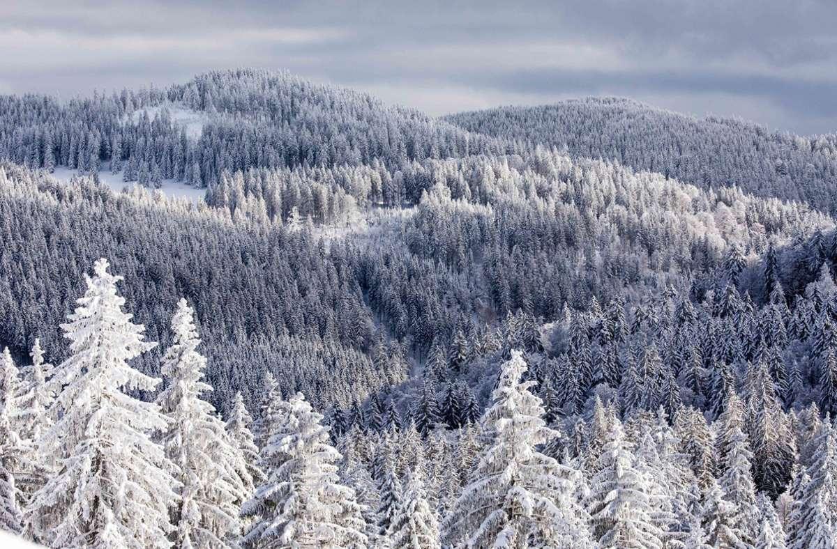 Der Schwarzwald lockt viele Ausflügler an (Archivbild). Foto: dpa/Philipp von Ditfurth