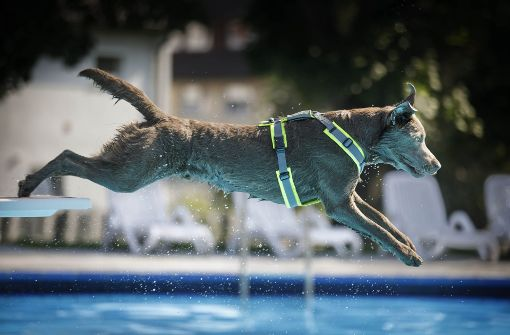 Freibädle wird zum Planschparadies für Hunde