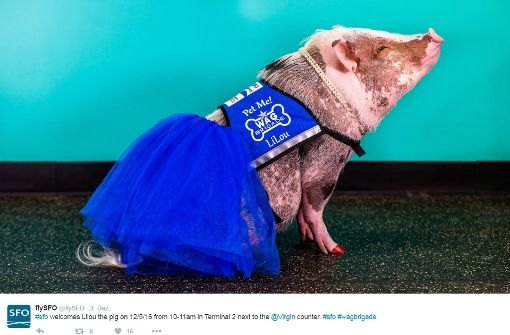 Schwein LiLou vertreibt den Stress