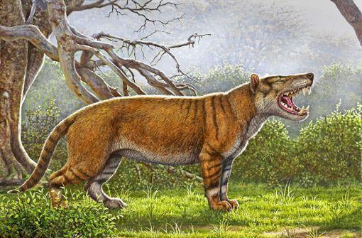 Unbekannter Riesenräuber aus der Urzeit