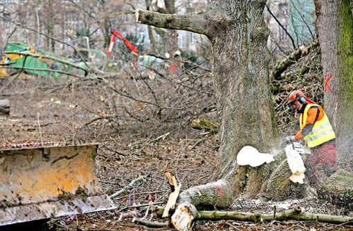 Waldarbeit – ein Job mit hohem  Risiko