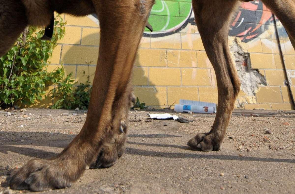 Im Netz kursiert ein verstörendes Video – nicht nur für Hundefreunde (Symbolbild). Foto: dpa/Z1021 Peter Endig