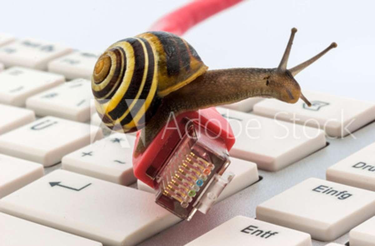 Der Fortschritt ist eine Schnecke: zumindest bei vielen Internetanbietern. Foto: Erwin Wodicka/Adobe Stock