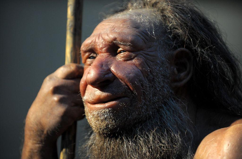 Nachbildung eines älteren Neandertalers im Neanderthal-Museum im nordrhein-westfälischen Mettmann:  Die Frühmenschen standen vor allem auf Mammut-Steak. Foto: dpa