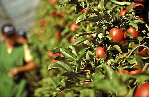 Südwest-Bauern beklagen hohe Ernteausfälle