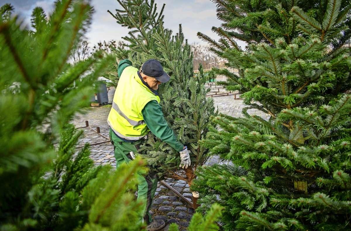Auch der Christbaumverkauf Foto: dpa/Sina Schuldt