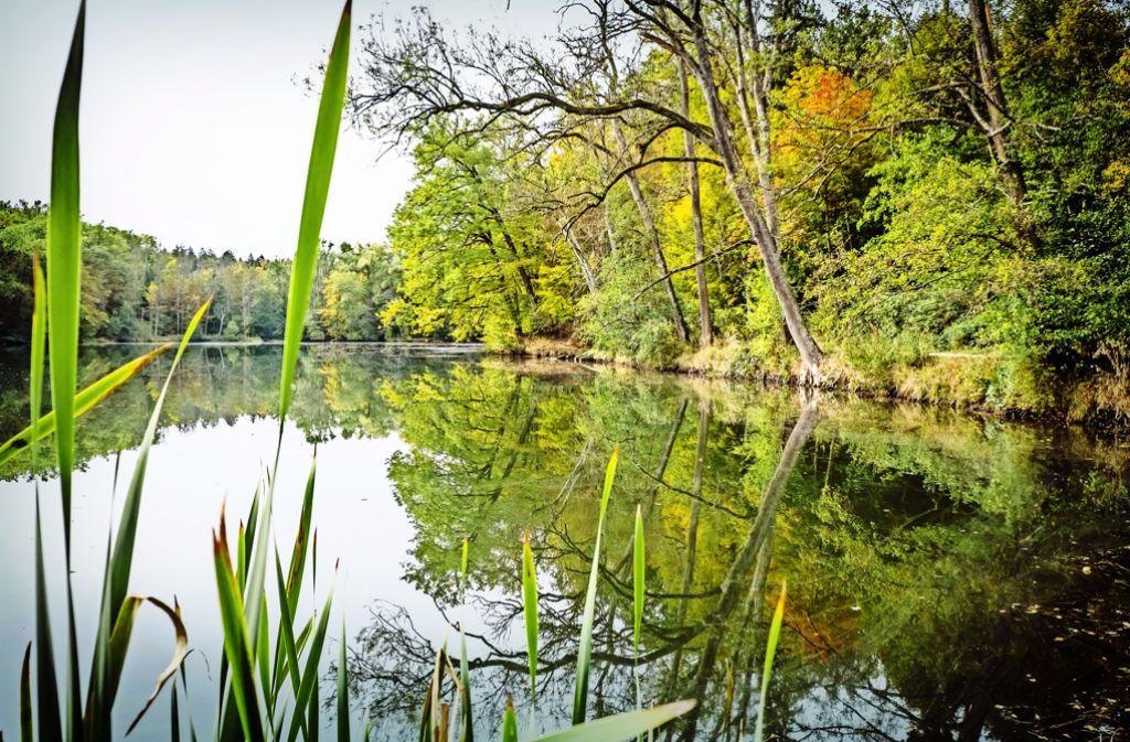 Idyllische Herbststimmung am Katzenbachsee. Das Gewässer soll verkauft werden. Foto: Lichtgut/Achim Zweygarth