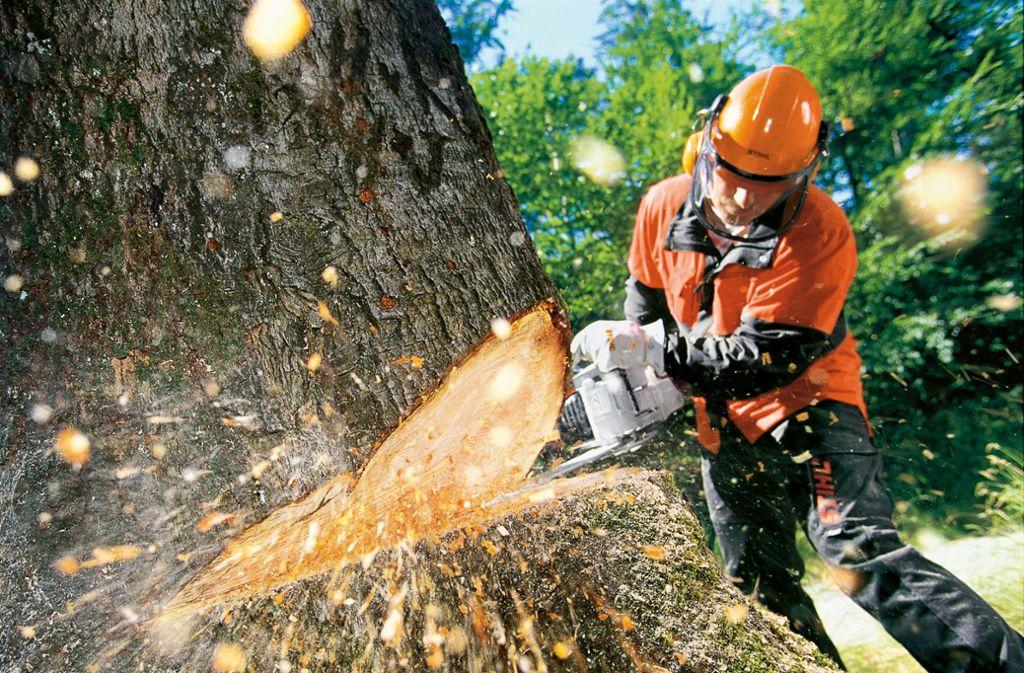 Leichtere Sägen haben in den vergangenen  Jahren auch das Fällen von Bäumen einfacher gemacht. Foto: Stihl