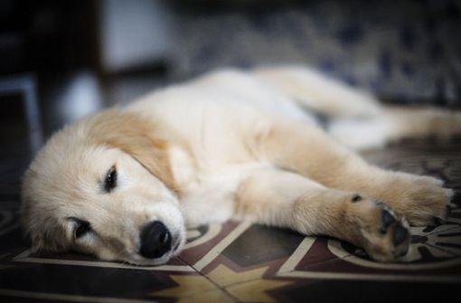 Zoll entdeckt sieben Hundewelpen in Kaninchenkäfigen