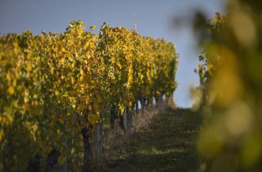 Weinbauern bekommen es mit pelzigem Schädling zu tun