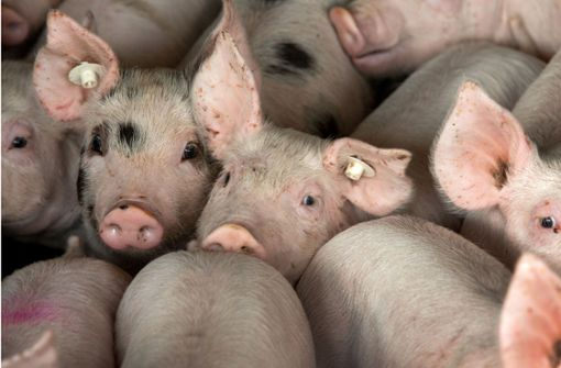 Agrarminister wollen zeitnah Tierwohllabel