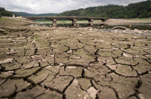 2019 wird zum Härtetest für Deutschlands Wälder
