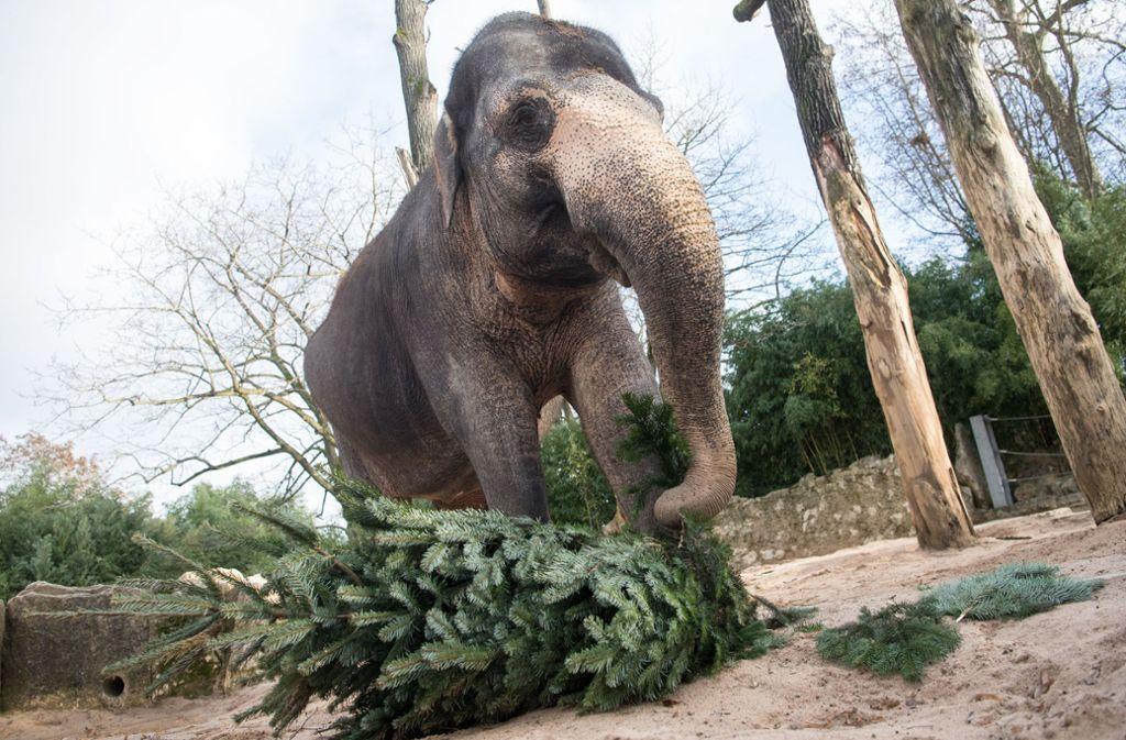 Die Elefanten in der Wilhelma bekommen 2021 ein neues Haus. Foto: dpa