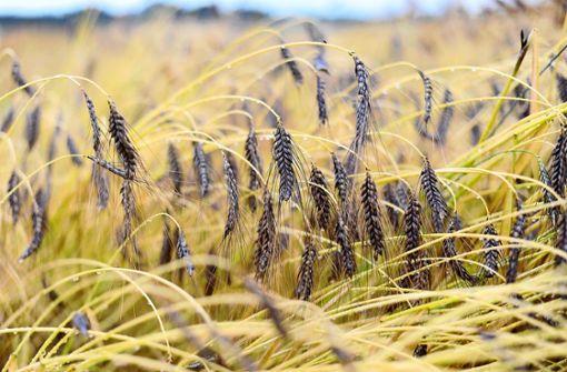 Jeden Tag  Neues zum alten Getreide