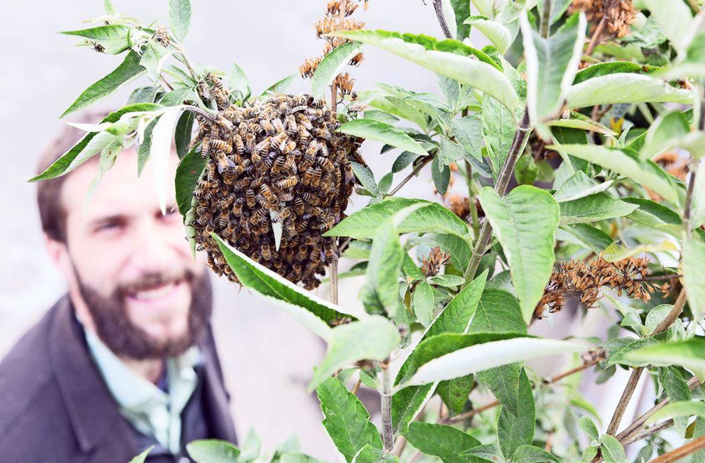 Ein Bienenschwarm ist ein immer seltener werdender Anblick. Foto: Pro Biene