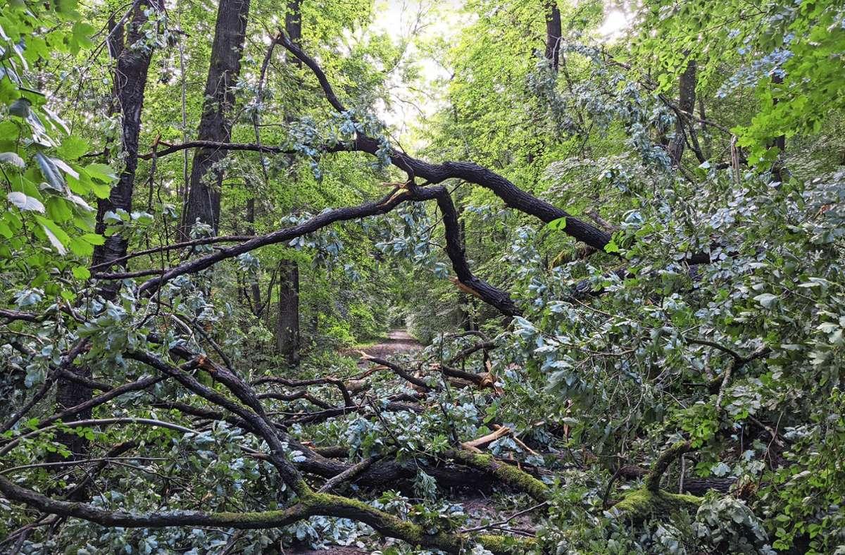 Im Wald sind die Schäden des Unwetters besonders sichtbar. Foto: Christian Watzke