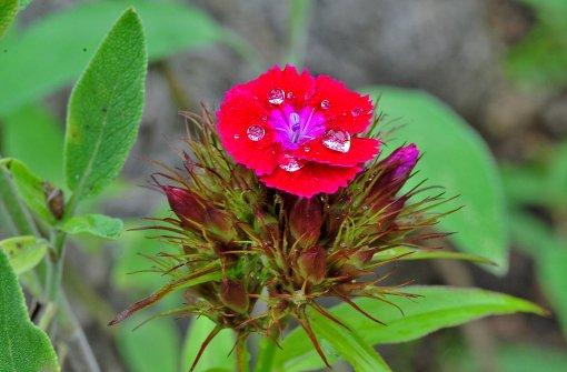 So schön glitzert das Wasser auf den Blumen