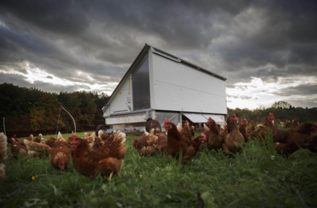 Die glücklichen Hennen von Kallenberg und ihr mobiles Hühnerhotel Foto: