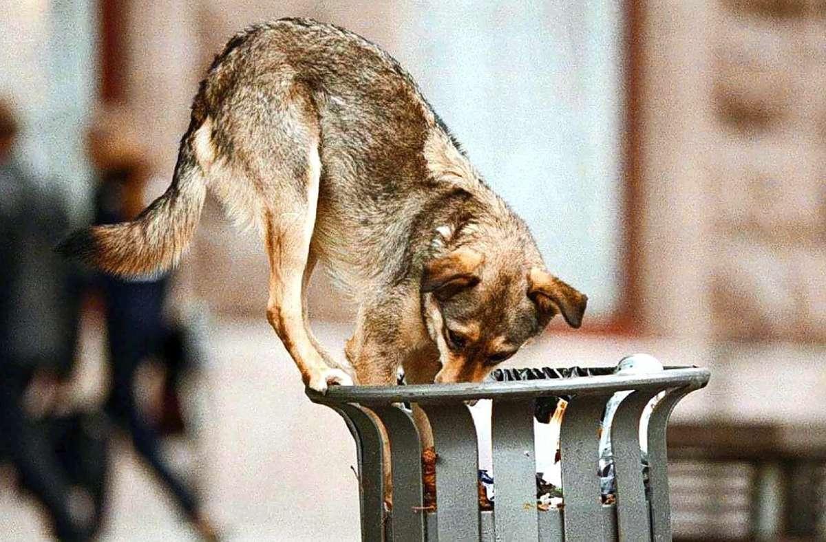 Da in Corona-Zeiten die Nachfrage nach Hunden groß ist, werden von zwielichtigen Händlern offenbar auch ehemalige Straßenhunde aus Osteuropa  verkauft, die   bereits als Welpen gelernt haben, sich vor Menschen in Acht zu nehmen. Foto: dpa/Sergei Supinsky