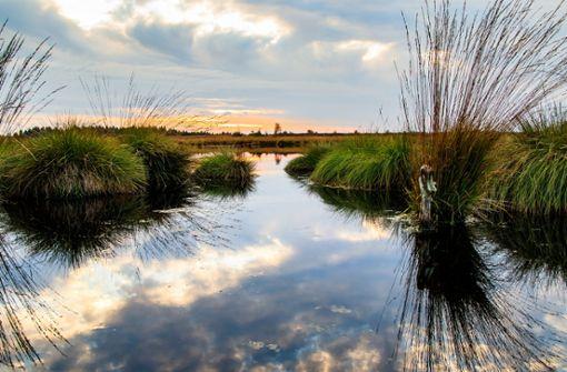Ostdeutschlands Oder-Neiße-Radweg führt vorbei an zauberhafter Schilf-und Wasserlandschaft.