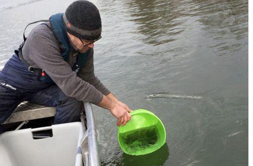 Zollbeamte retten geschützte Aale vor dem Kochtopf