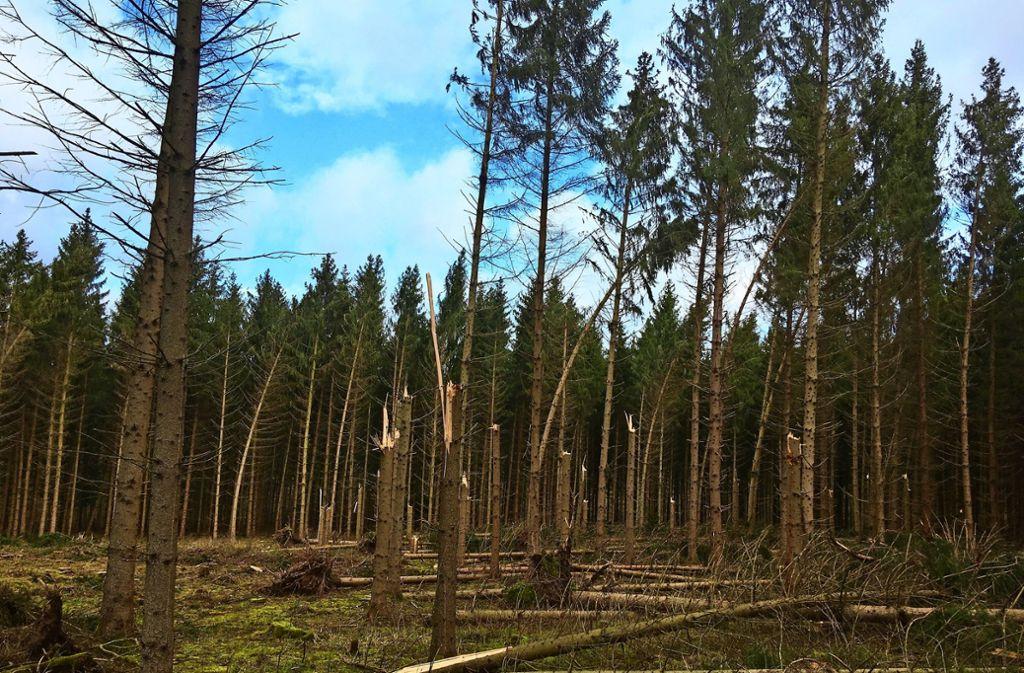 Flächenschäden, wie beim Orkan Lothar blieben den Wäldern erspart. Foto: Landratsamt Ludwigsburg