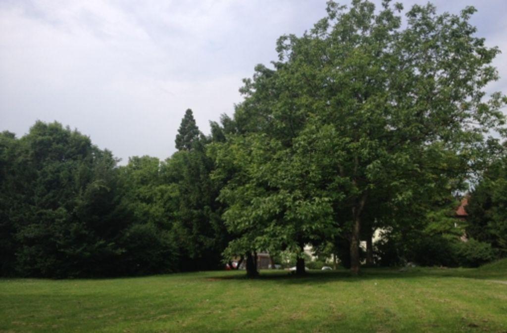 Einst ein Strichertreff, dann einfache Grünfläche – nun soll wieder Leben einkehren im Veielschen Garten. Die Stadt will 260000 Euro investieren. Foto: Maira Schmidt