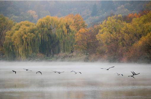 Umwelt und Naturschutz – das wollen die Parteien jeweils erreichen