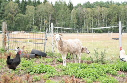 Hühner geköpft, Schafe gefesselt –  und in der Enz versenkt