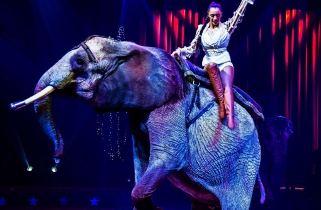 Umstrittenes Schauspiel: die Elefantendressur im Weltweihnachtscircus hat scharfe Kritiker. Foto: Lichtgut/Max Kovalenko