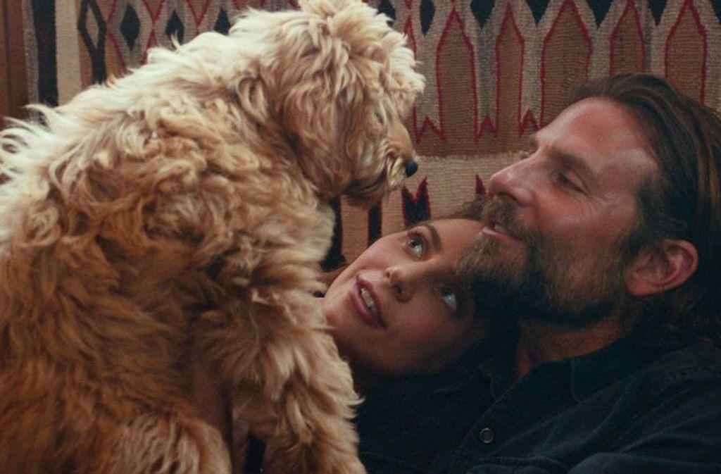 """Charlie heißt der Hund von Bradley Cooper, der in dem Musik-Liebesdrama """"A Star is born"""" mitspielte. Dafür hat die Tierrechtsorganisation Peta den Schauspieler mit einem Preis geehrt. Foto: Warner"""
