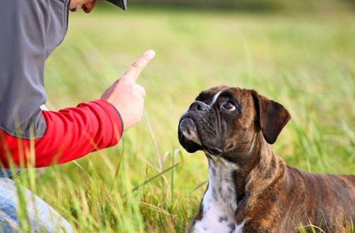 Senior will Stadt wegen eines Hundeangriffs verklagen