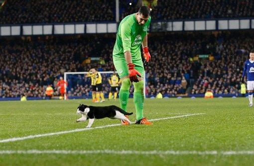 Wenn eine Katze über das Spielfeld flitzt
