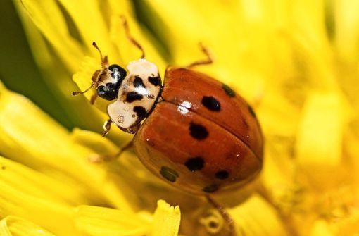Ohne Blumen blüht den Insekten das Ende