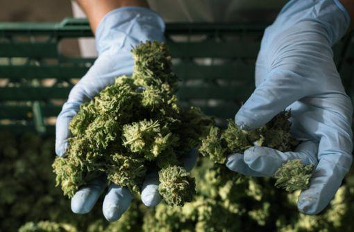 Starke Nachfrage nach medizinischem Cannabis