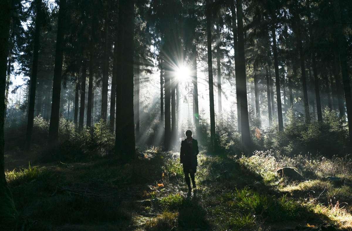 Die Gruppe verlief sich im Schwarzwald. Die Polizei musste helfen (Symbolbild). Foto: dpa/Arne Dedert