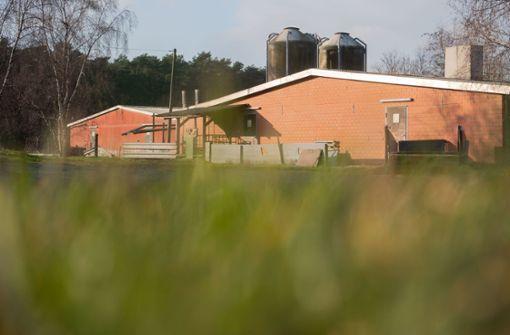 Bis zu 1000 Schweine in Mastbetrieb verendet