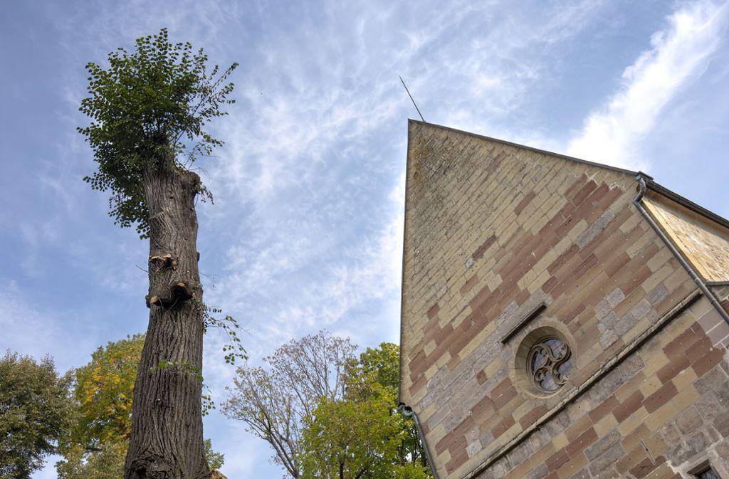 Viele Äste  der Jakobuslinde an der Schlosskirche mussten abgesägt  werden. Foto: Frank Eppler