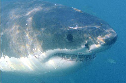 Hai tötet 26-jährigen Wassersportler