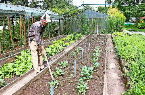 Preisgekröntes Gartenprojekt in Gefahr